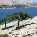 otok Pag Hrvatska